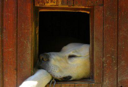 犬小屋DIY!愛犬にオシャレな犬小屋を手作りしましょう! アイキャッチ画像