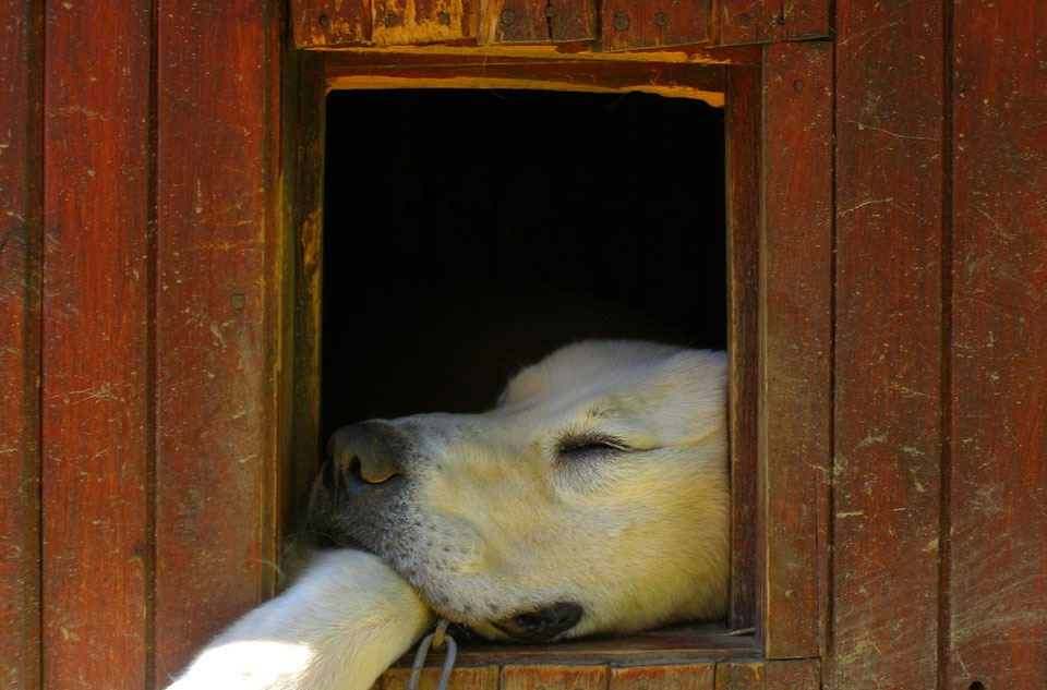 犬小屋DIY!愛犬にオシャレな犬小屋を手作りしましょう!