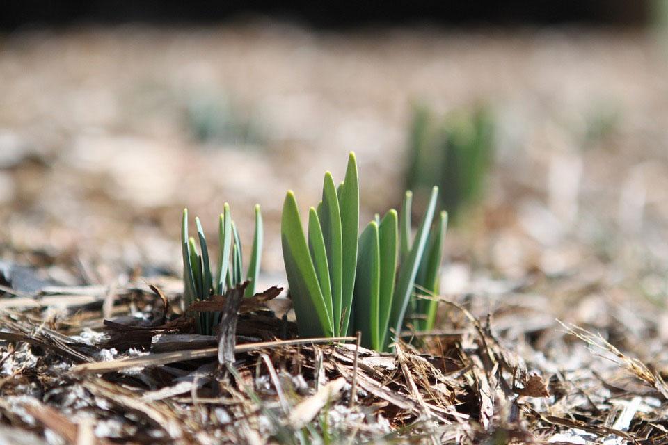 培養土おすすめ5選|植物の種類別に人気の高いタイプをピックアップ