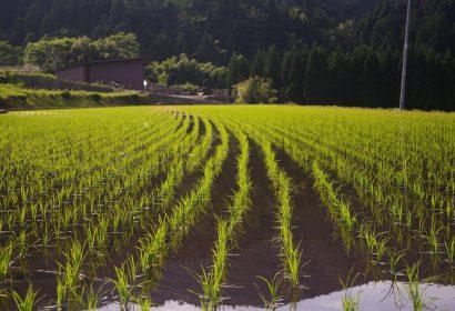 ウェーダー人気5選|防水つなぎ田植え・水仕事におすすめ アイキャッチ画像