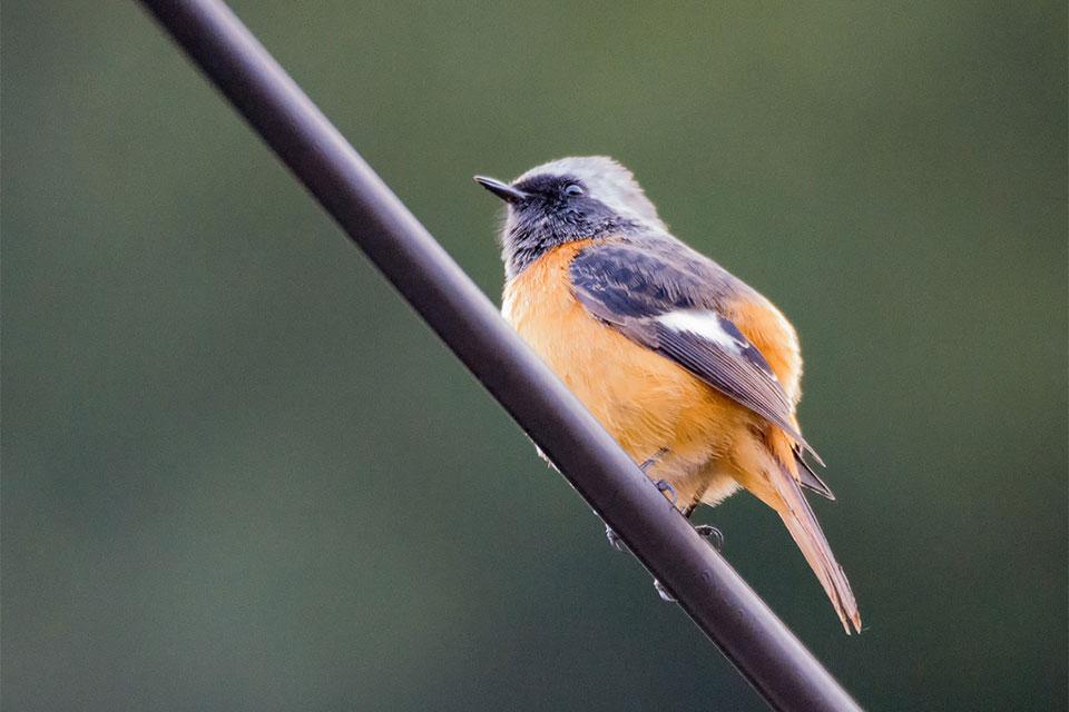 小鳥と電線