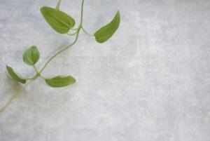 モルタル仕上げの壁と植物
