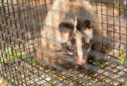 獣害対策のための「電気柵」とは?基礎知識から使い方まで徹底解説! アイキャッチ画像