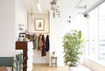 人気の大型観葉植物12選!育てやすいおすすめ植物をご紹介!