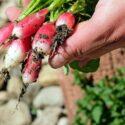 おすすめの野菜肥料10選!家庭菜園にぴったりの人気商品をご紹介!