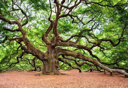 庭木の剪定方法とは?基礎知識から正しい選定方法を徹底解説! アイキャッチ画像
