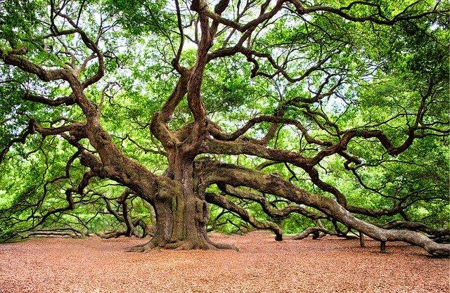 庭木の剪定方法とは?基礎知識から正しい選定方法を徹底解説!