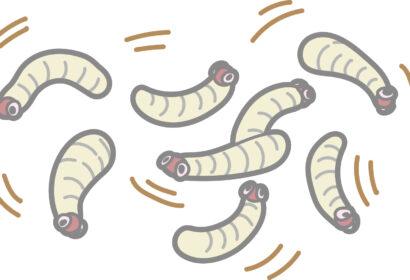 ウジ虫の駆除方法とは?効果的な対処方法を徹底解説!