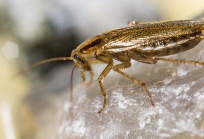 ゴキブリの駆除方法とは?効果的な対処方法を徹底解説!