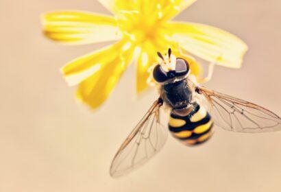 蜂の正しい駆除方法とは?その被害から撃退法まで詳しく解説!