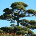 庭木は自分で伐採できる?必要な準備から方法まで詳しく解説!