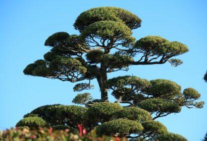 庭木は自分で伐採できる?必要な準備から方法まで詳しく解説! アイキャッチ画像