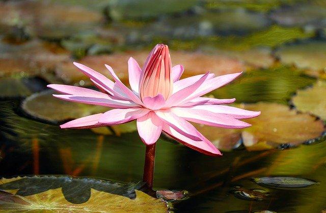小さな池【ビオトープ】とは?簡単な作り方から注意まで徹底解説!