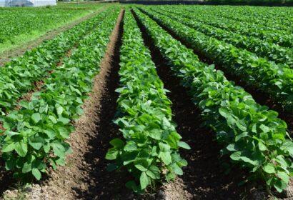 【農業】への転職の注意点とは?成功するためにやるべきことを徹底解説! アイキャッチ画像