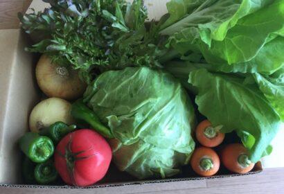 春の食べ物といえば?魚・野菜・果物15選と旬の食材で作る料理をご紹介! アイキャッチ画像
