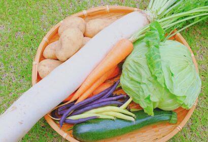 一人暮らしにおすすめの食材宅配サービス人気6選!選び方のポイントは? アイキャッチ画像